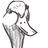 Duck normal