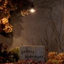 gallery hydrangea ☞ 2/28(日)まで山村まゆ子個展『-鳥のかえる場所-』開催中