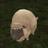The profile image of meringue6204