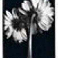 sabrina downard | Social Profile