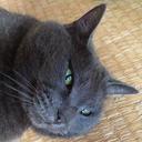 ぼんじん(猫おじさん介護中)