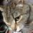 The profile image of kentsugi_commer
