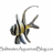 @Aquariumblogcom