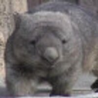 the wombat   Social Profile