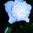 @bluerose_love