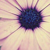 bluo | Social Profile