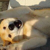 もんもん@だが写真の犬はムサシだ! | Social Profile