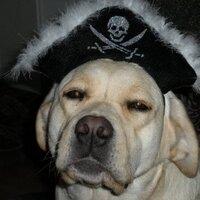 Piratelabradors | Social Profile