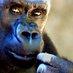 PrimateNet's Twitter Profile Picture