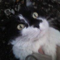 とらひこ47  ~ネコの人~ | Social Profile