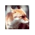 @fox2389