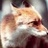 fox2389