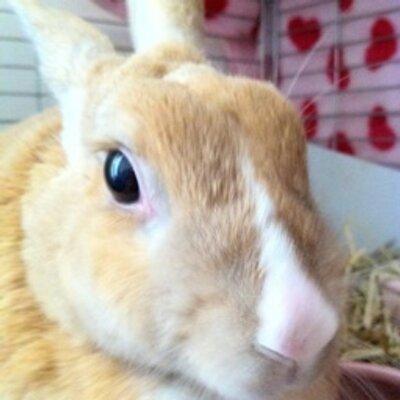 暴れウサギ(ナベ) | Social Profile