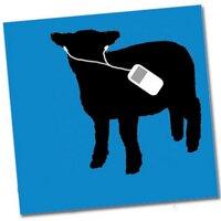 sheeplamb07
