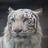 The profile image of masaki_kkmt