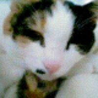サノアイ | Social Profile