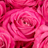 The profile image of ribbon52