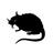 Stray Rats