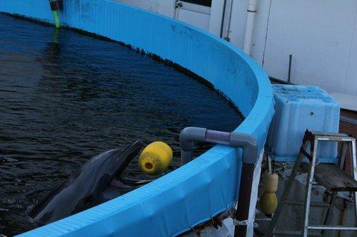 Misty The Dolphin Social Profile