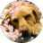 The profile image of seya_kara_