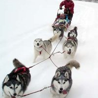 Atii Sled Dogs | Social Profile