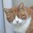 黒猫巡査 atsushi_chan のプロフィール画像