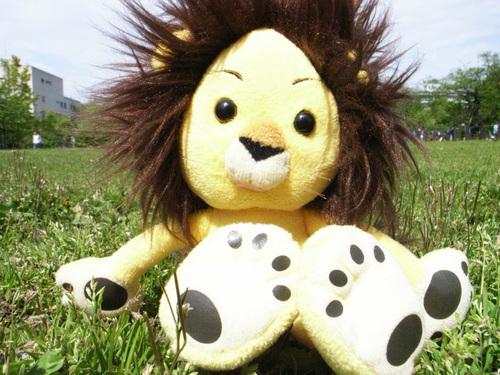 Ken's C.H.Lion Social Profile