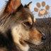 Rescue Animals Social Profile