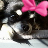 桜月夜 | Social Profile