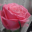 The profile image of cherryr51150128