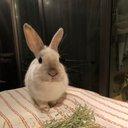 Rabbit Moffy 2020