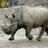 rhino_general