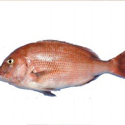 伊達真鯛の鯛ちゃん   Social Profile