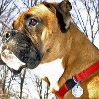 Jackson the Boxer | Social Profile