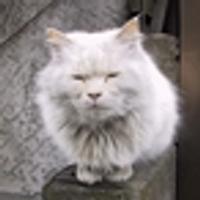 Mr.k.kazu | Social Profile
