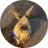 The profile image of masuechon