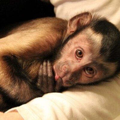 MonkeyBoo | Social Profile