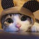 🇯🇵猫伯爵🇺🇸猫語普及😸🐯#DOJ