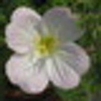 KYS | Social Profile