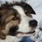 asheepdogdiary | Social Profile