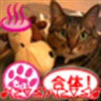nekodama(ねこだま) | Social Profile