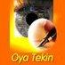 Oya Tekin's Twitter Profile Picture
