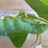The profile image of rowazou