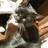 @hazuki_cat