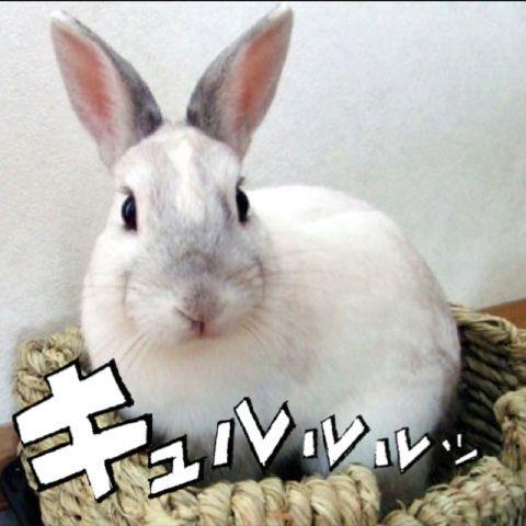 B-CHAN(びーちゃん) Social Profile