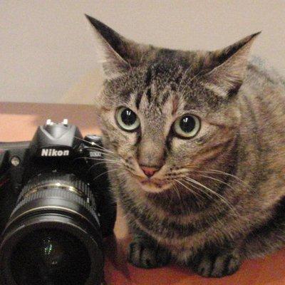 もの書き写真堂 | Social Profile