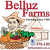 Belluz Farms Twitter