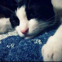 cokeBERRYcat   Social Profile
