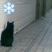 黒猫マイクロファンド Social Profile