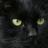 壺の黒猫 with 三つ子icon
